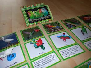Photo: Lesedose Exotische Vögel -> Endlich Pause