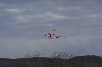 Photo: More flamingos - they were really awesome!