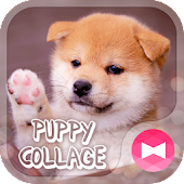 Cute Wallpaper Puppy Collage Theme