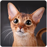 Talking Abyssinian Cat Icon