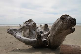 Photo: Pacific Rim NP - Long Beach