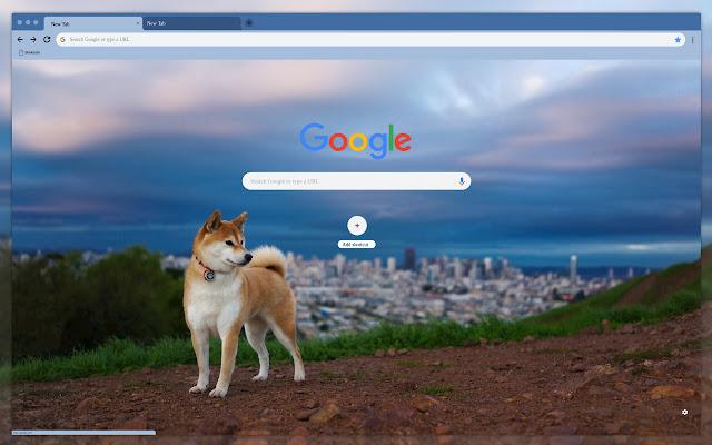 Dog on city background