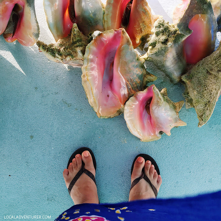 Conch Cruise (15 Best Things to Do in Turks and Caicos).