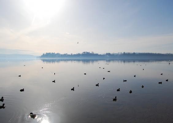 Star in the lake di jamadrin