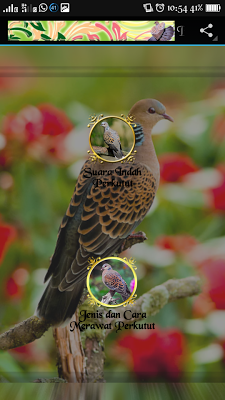 Burung Perkutut - screenshot