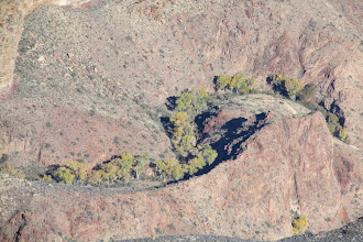 Photo: Grand Canyon trees below!