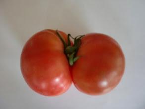 Photo: ふたごのトマトです。