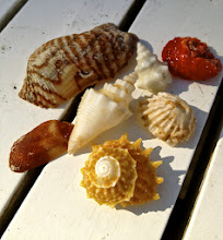 Photo: A few of the shells I found on the beach.