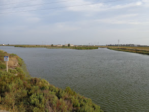 Photo: A tributary of the riu Ebre flowing out into the lagoon