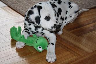 Photo: Carlotta mit Frosch - 10 Wochen