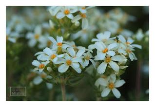 Photo: Eastern Sierras-20120715-309