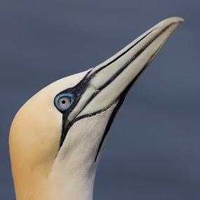 jan van gent by Anja Voorn - Animals Birds