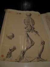 Photo: Anatomy drawing.