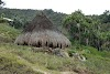 Indonesia. Papua Baliem Valley Trekking. A traditional Papua hut in Beligama
