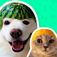 Best Animal Stickers for WhatsApp WAStickerApps for PC-Windows 7,8,10 and Mac