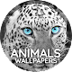 Animals Wallpapers for PC-Windows 7,8,10 and Mac