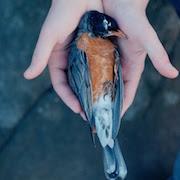 Суеверия сбить птицу