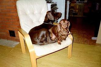 Photo: Äijä idolinsa saksanseisojauros Nipan kanssa Äijä with his best friend Nipa, both are males.