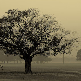 Maidan at dawn time by Sandip Ghose - Nature Up Close Leaves & Grasses ( nature, park, kolkata, trees, people )