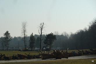 Photo: fasanenhof / künstlerholz + 8 bäume 2