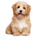 Guess the Dog: Tile Puzzles Icon