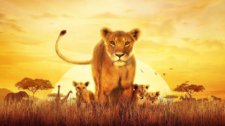 Watch Serengeti live