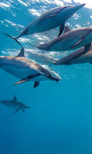 LWP 海豚