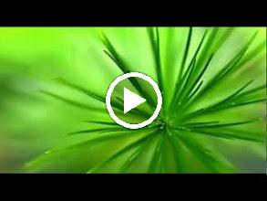 Video: A. Vivaldi  Amsterdam concerto for violin, strings   b.c. in C major (RV 195) -