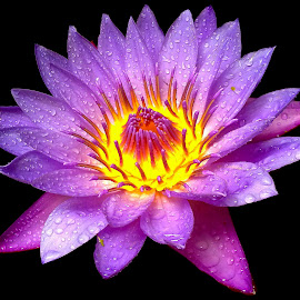 Waterlily by Asif Bora - Instagram & Mobile Other (  )