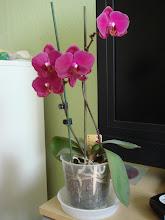 Photo: Orchidea -hónapok óta virágzik :)
