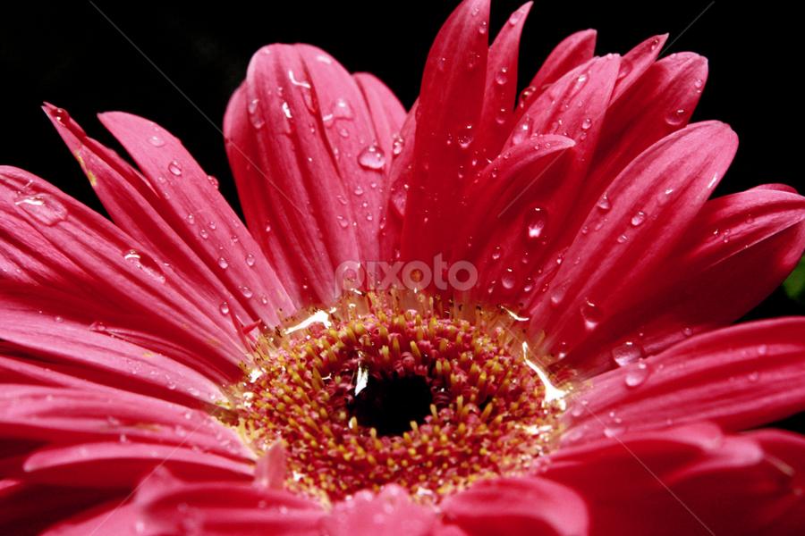 *****Star***** by Shikhar Srivastava - Nature Up Close Flowers - 2011-2013
