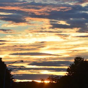 The end of Sundown by Tony Dominguez - Novices Only Landscapes ( sky, novice, tree, sunset, landscape )