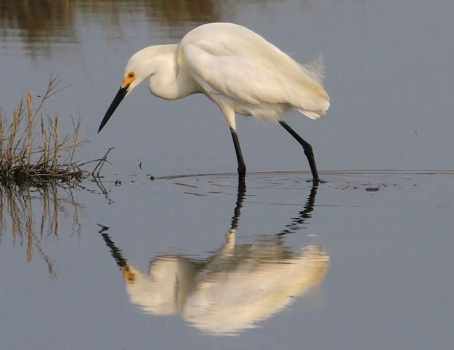 by Roger Becker - Animals Birds ( nature, wildlife, birds,  )