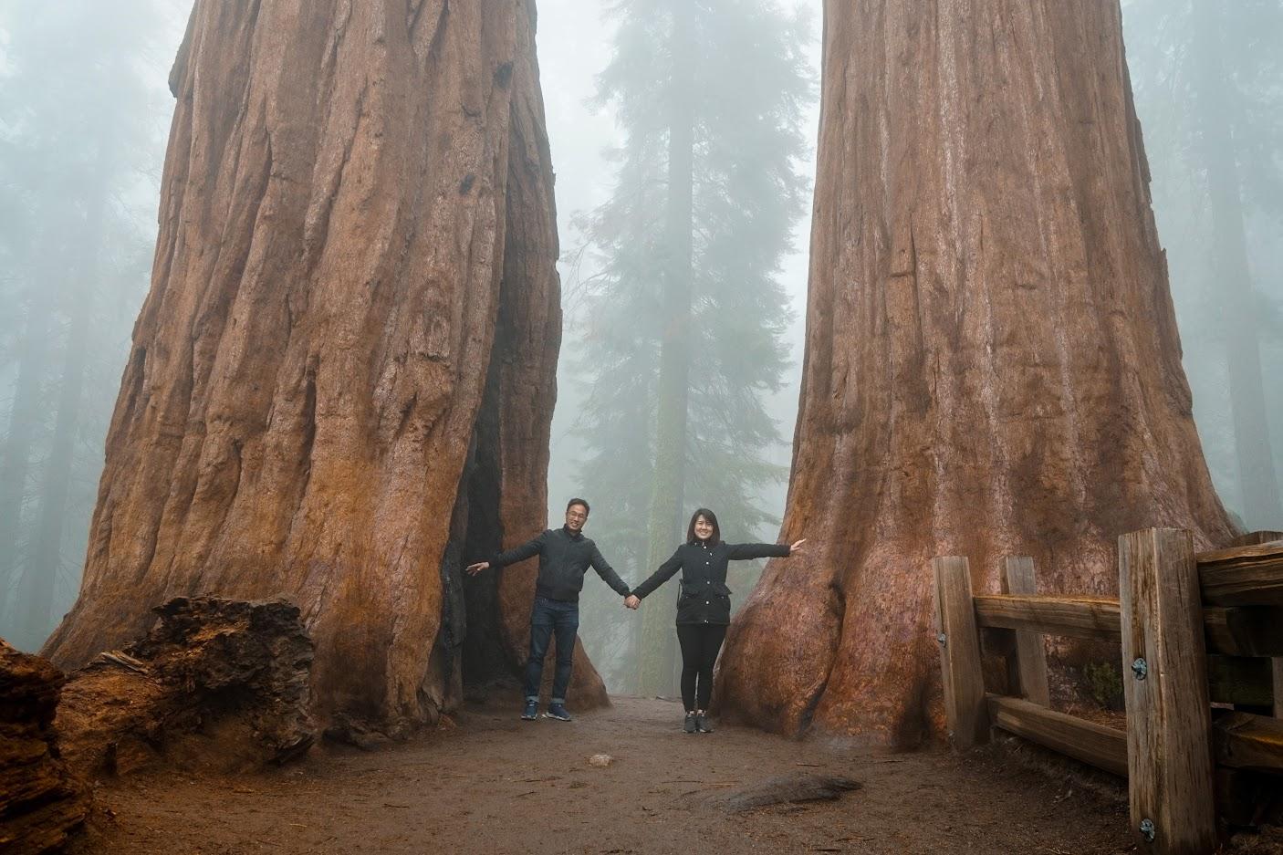 Twins Sequoia