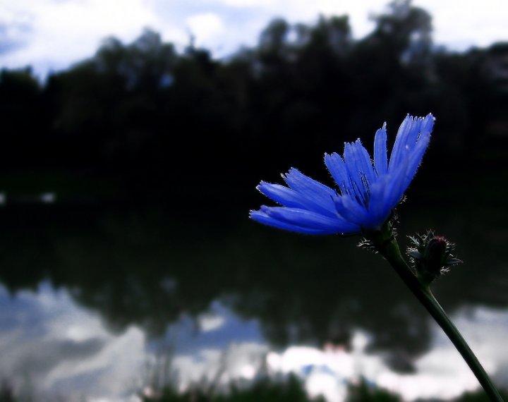 blu on the lake di Francesca
