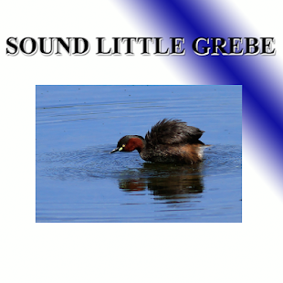 Small birds trumpet - náhled