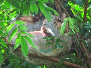 Photo: Sleeping sloth with baby
