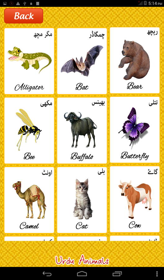 Animals Name With Letter V