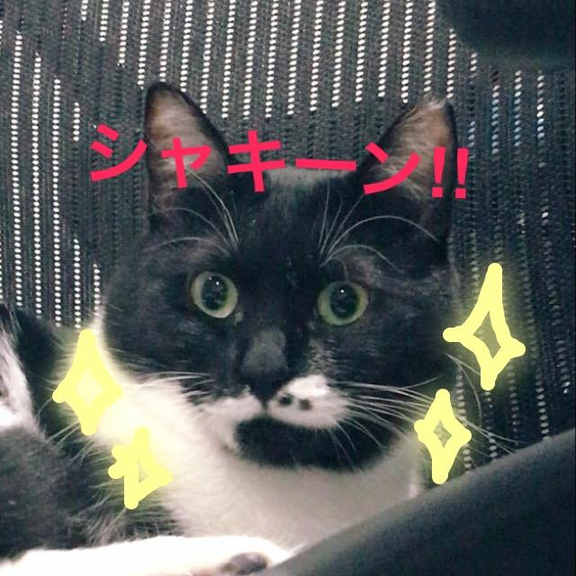 猫の夜行性と人との生活についてのお話。