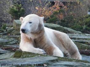 Photo: Knut hat sich ein bequemes Plaetzchen gesucht ;-)