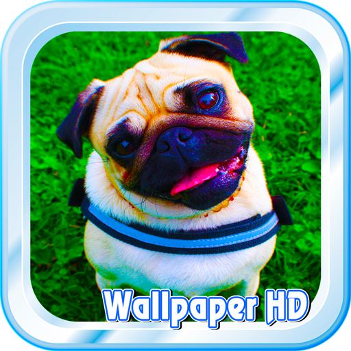 Pug Live Wallpaper HD Free