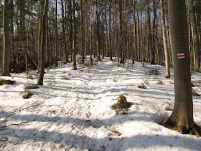 Photo: 05.Od wysokości ok. 800 m n.p.m. jest jeszcze śnieg.