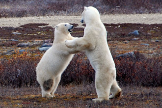 "Photo: Looks like ""dancing bears."""