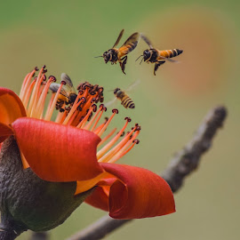 Spring Flight by Tanvir Akash - Flowers Flowers in the Wild
