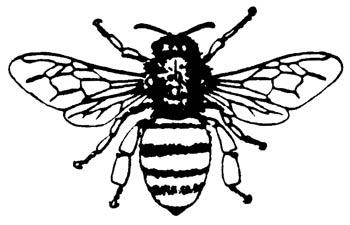 Bee Joyful
