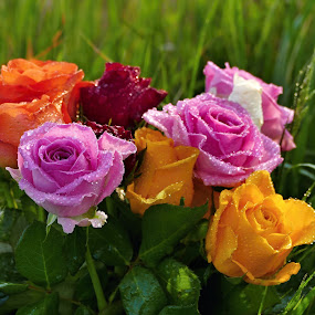 by Lenka Bryndová - Flowers Tree Blossoms