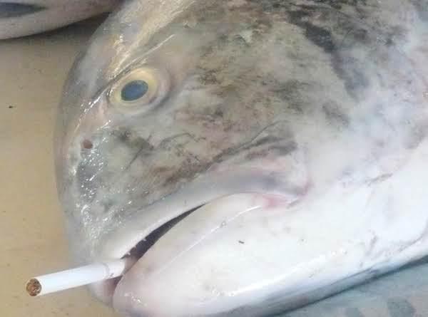 Smoking Fish Recipe