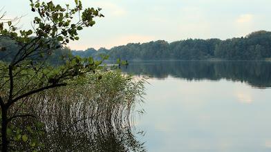 Photo: Ostufer des Großensee mit Schilfbewuchs in den Buchten