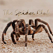 Spider Club Of Southern Africa