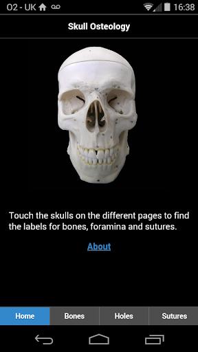 Skull Osteology